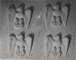 2526 - Eagles